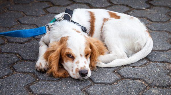 Posiciones de sueño en perros 2 Sleeping Pet